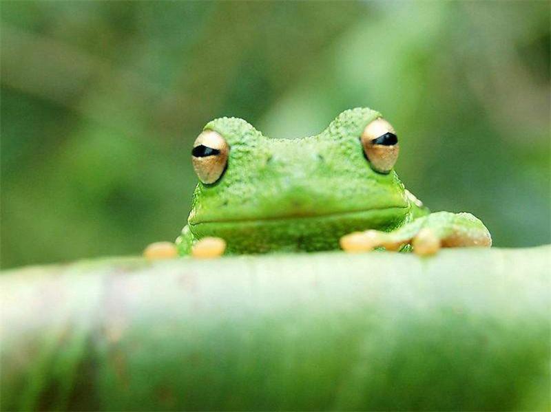 蛙蛙许愿池.jpg